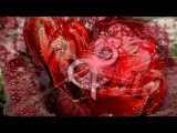 «С моей стены» под музыку ♧ Ирина Круг и Алексей Брянцев - В сердце твоем [2010]. Picrolla